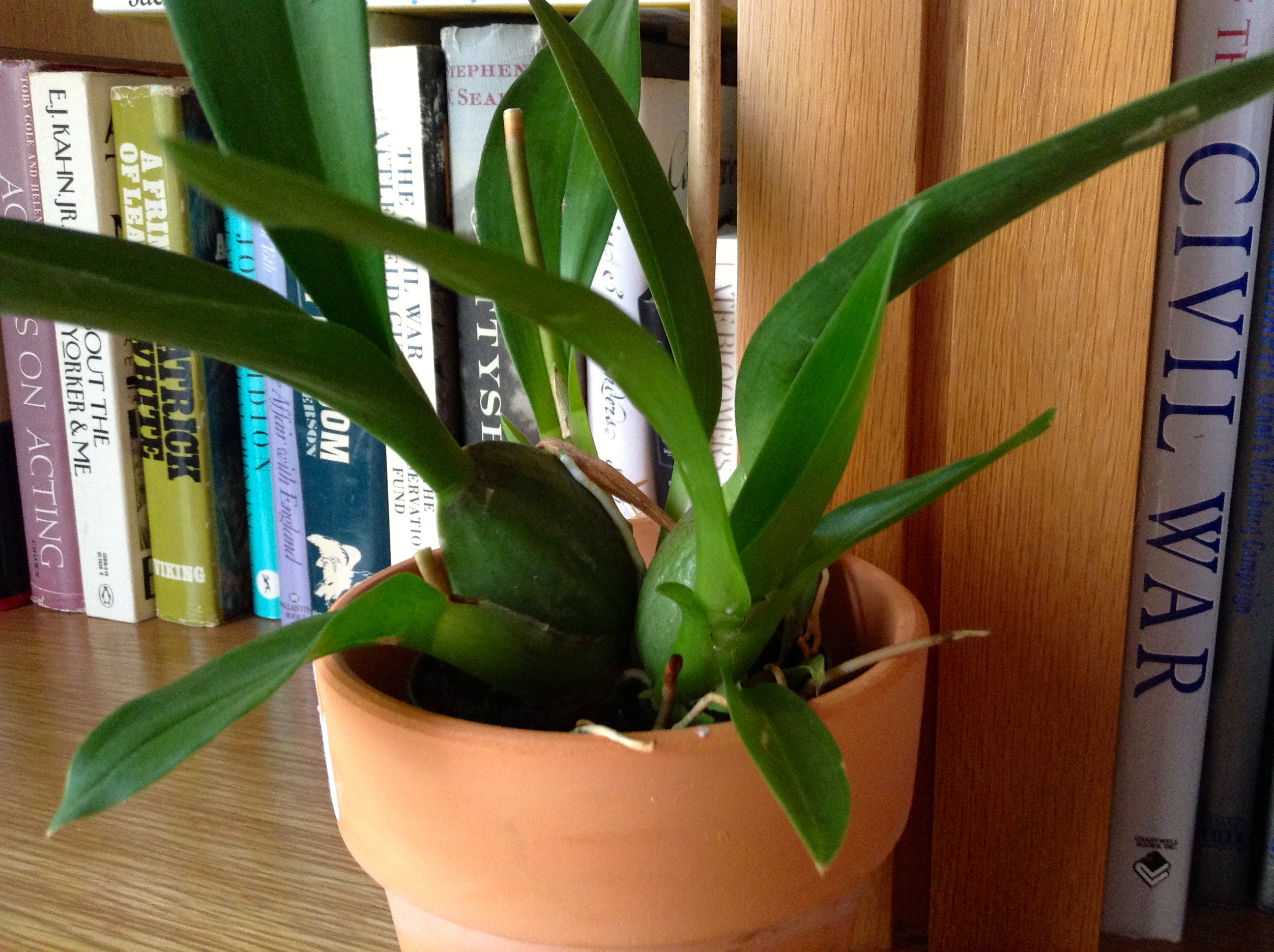 Rooting Indoors The Orchid People Roots In Reality