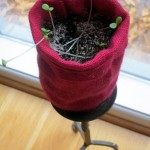 Zinnia Seeds in Burlap Sack