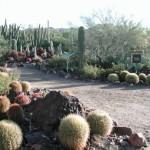Cactus Garden - Sonoran Desert Museum
