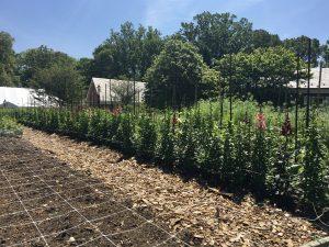 Hillwood's Cutting Garden