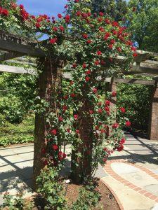 Rose Garden Pergola